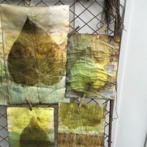 Mauersberger_catalpa_leaves_on_paper