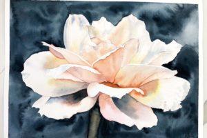 N. Boone Peach Rose