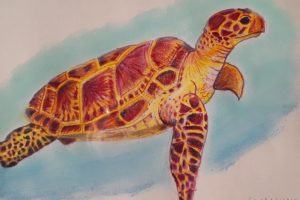 Cindy Wadkins Turtle