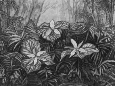 Lori Nelson-Clonts Trillium (1)