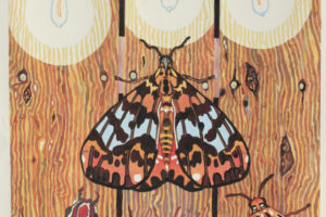 Mike Bathum Moth-Drawn-to-the-light-6