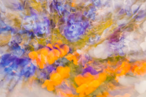 Rich Cavnar Violets