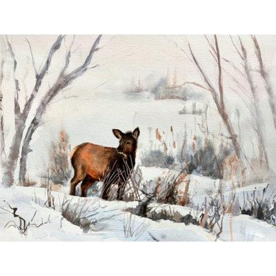 Charlene Hall, Winter Elk 800x800