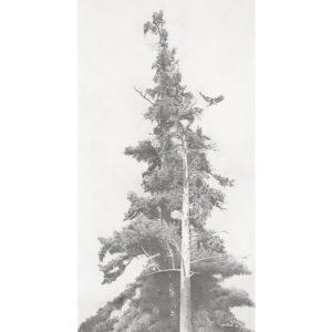 Ron Pattern EAGLE TREE