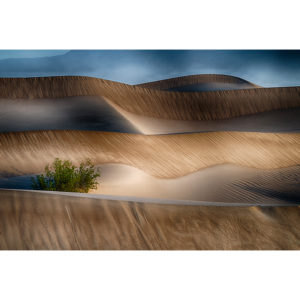 Tommy Gibson, Mesquite Dunes2