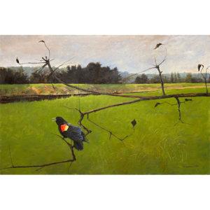 Kammer-Red-Winged-Blackbird